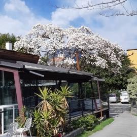 PRIMAVERA 2021 www.elitesportriva.it  #Rivadelgarda #Trento #labusa #laponale #gardasee #gardalake #visittrentino